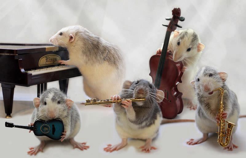 [Image: rat-Band.jpg]