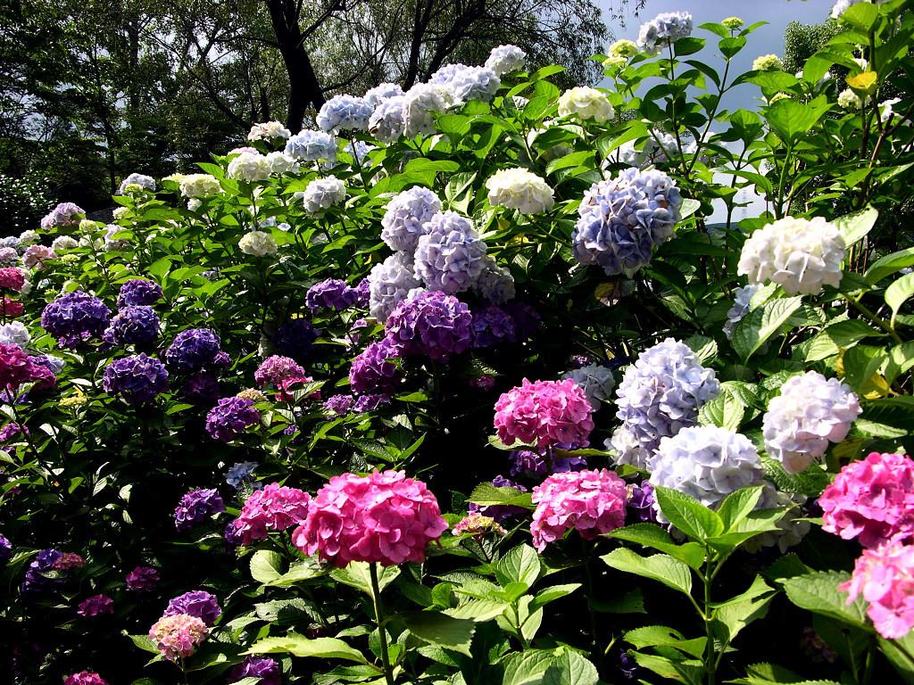 Flower garden wallpaper top hd wallpapers for Beautiful flower garden images