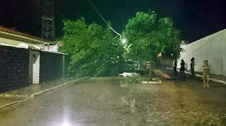 Seridó paraibano: Chove granizo na zona rural e árvore cai em cidade da região