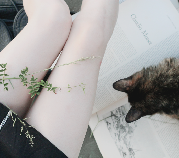 cat, monet, book, plant