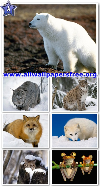 60 Amazing Animals Wallpapers 1280 X 1024 [Set 5]