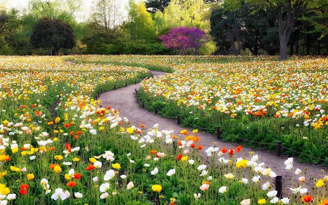 Park vol bloemen