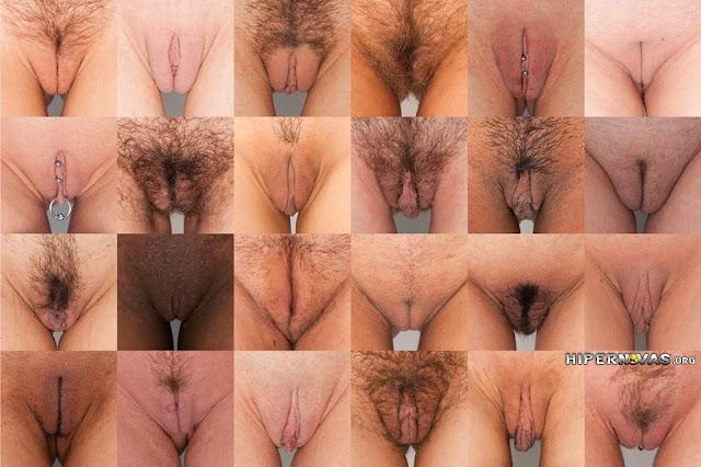 Colagem com imagens reais mostrando a relação entre os grandes lábios, clitóris e pequenos lábios em diversos tipos de vaginas.