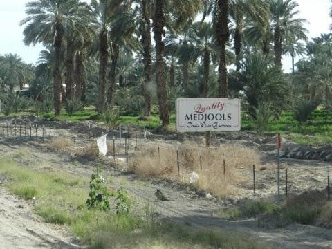 Oasis Date Gardens In Thermal California