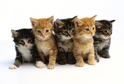 Beautiful Cats and Kittens Picture and Wallpaper