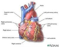 askep gagal jantung kongestif, askep CHF, Blog Keperawatan