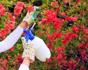 Basmi Hama Kutu Putih dari Bibit Tanaman Sayuran