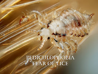 Pediculophobia, fear of lice