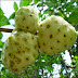 Noni Uses, Benefits & Side Effects