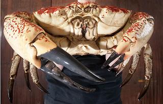 el cangrejo mas grande del mundo
