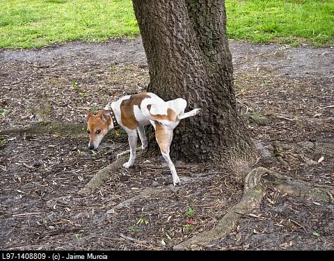 Dog pee mats australia