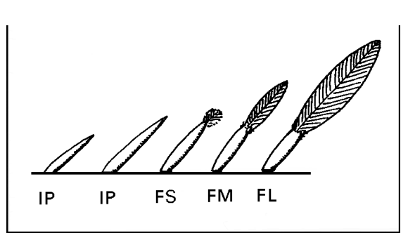Feather codes