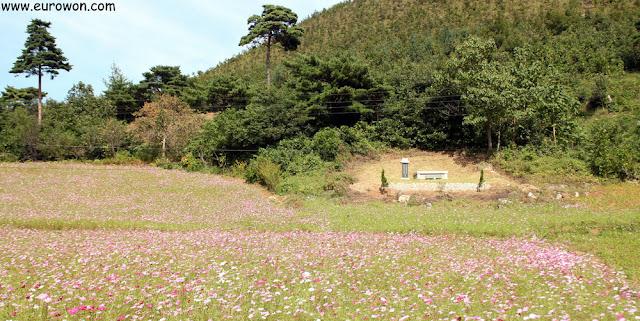 Tumba tradicional coreana rodeada de flores cosmos