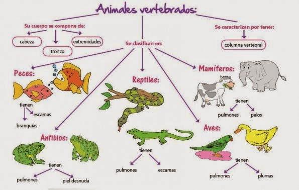 Cosas de nios para la escuela ANIMALES VERTEBRADOS E INVERTEBRADOS