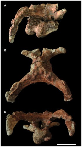 New hadrosauroid dinosaur found in China