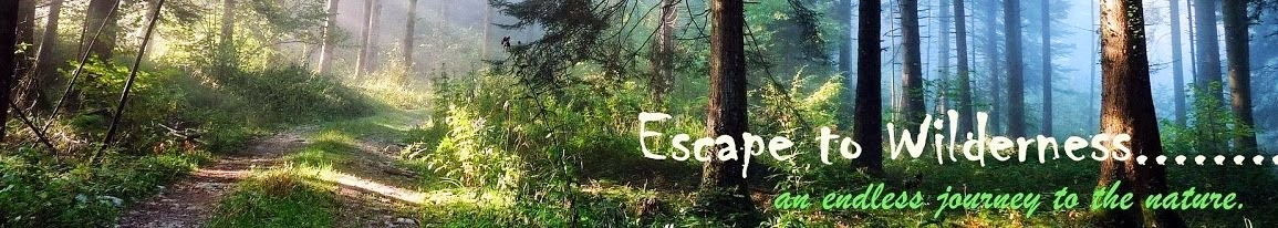 Escape to Wilderness.........