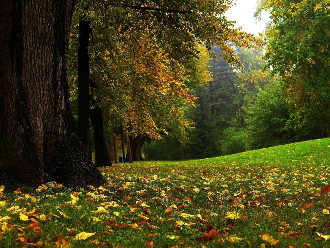 http://1.bp.blogspot.com/-Uj2XwZGrkbE/UBEUTqF3hNI/AAAAAAAAAhQ/SR8W25Rnb7E/s1600/Nature+Wallpaper+-+forest+Garden+summer.jpg