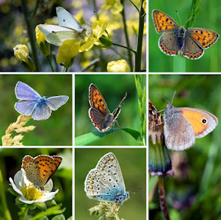 Fotos de Mariposas