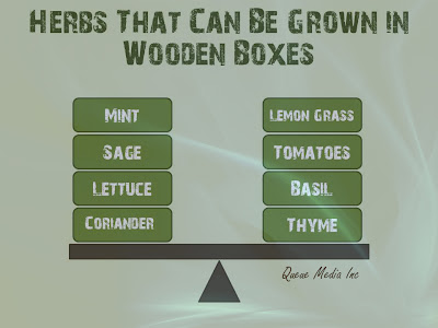 Herbs you can grow