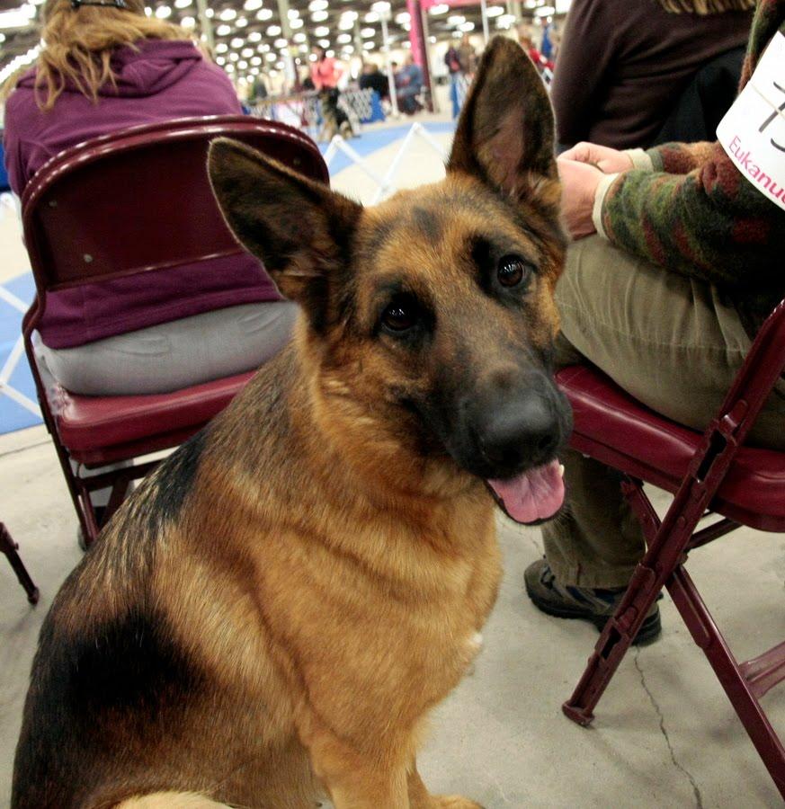Halifax Kennel Club Dog Show