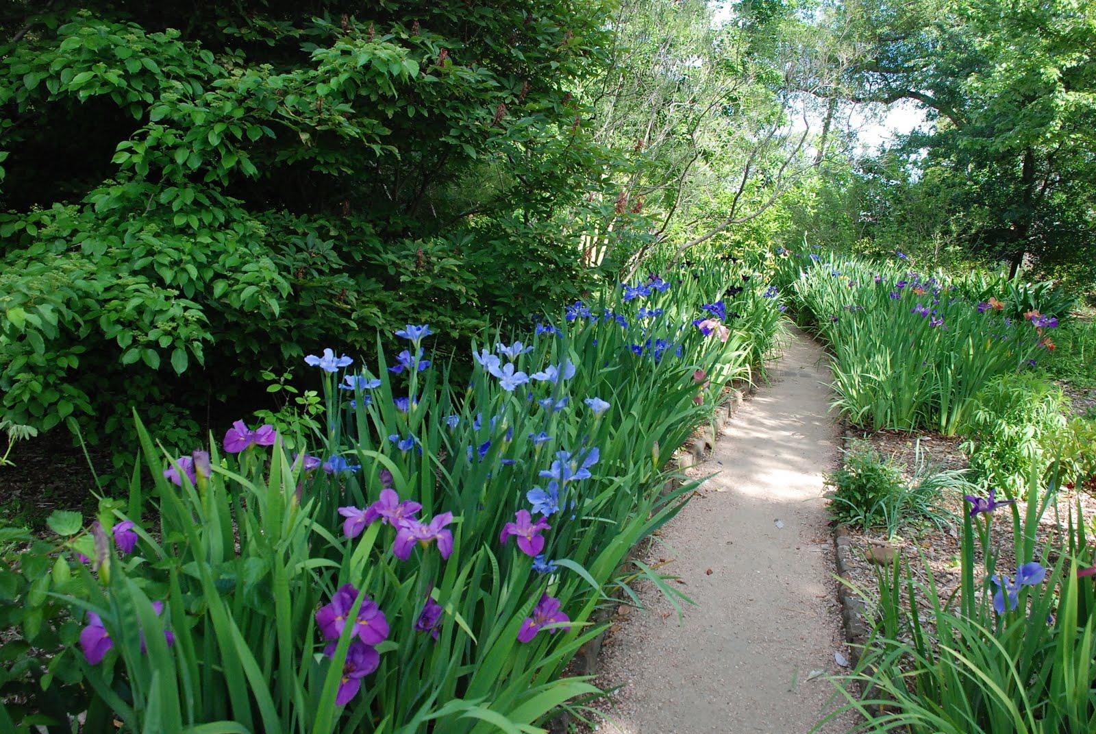 World of irises the iris center of the universe revisited for Irish garden designs
