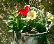 Mis plantas