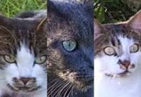 Petit à petit, les chats deviennent l'âme de la maison (Jean Cocteau)