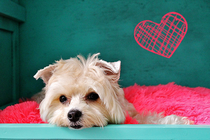 Stock up on your pet's favorite Big Heart Pet brand treats, Pup-Peroni, Milk-Bone, and USA Made Milo's Kitchen at Walmart this Valentine's Day and #TreatThePups! #Ad #CollectiveBias