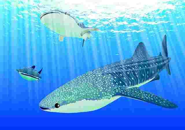 Balık Baştan Kokar