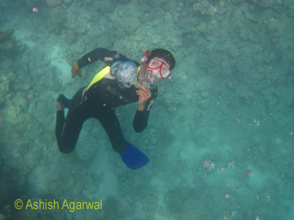 Another view of the guide coming up from the shallow depths of water near a coral reef in the Red sea