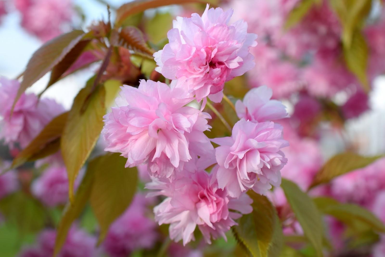 Fotografisch durch die Jahreszeiten: Frühling