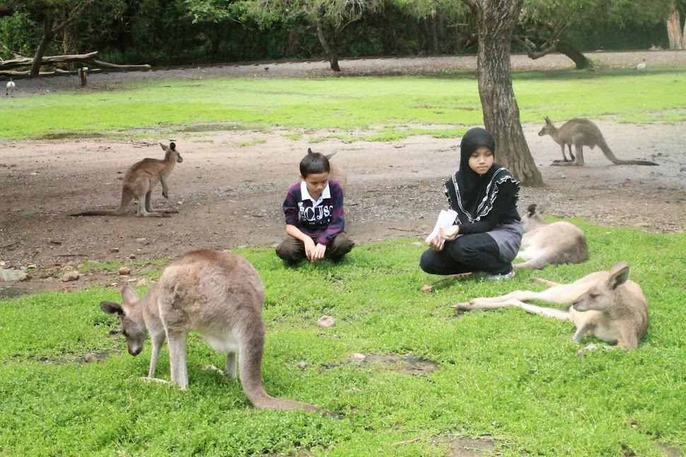 Currumbin Wildlife