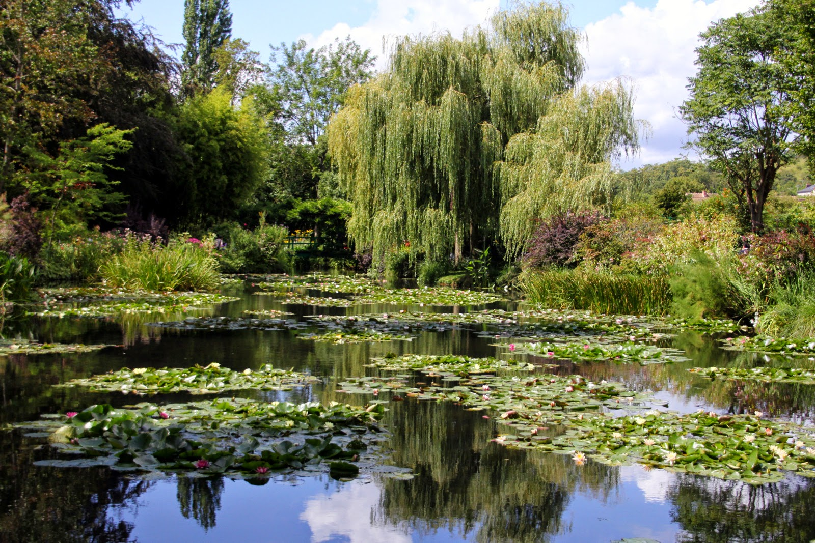 Jardins de Claude Monet - Nymphéas