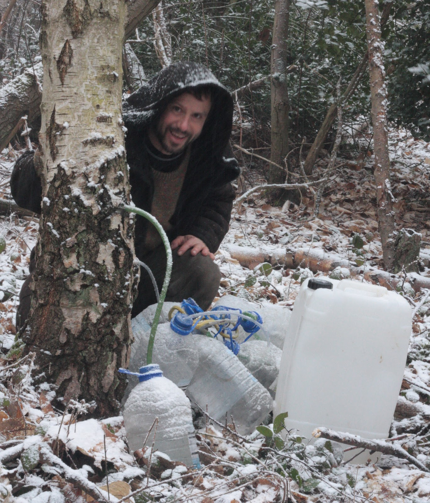 Birch sap - when to collect, benefit and harm 32
