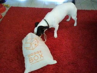 Ma Doggy Box de juin