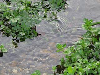 A small stream