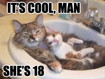 gambar kucing lucu mandi