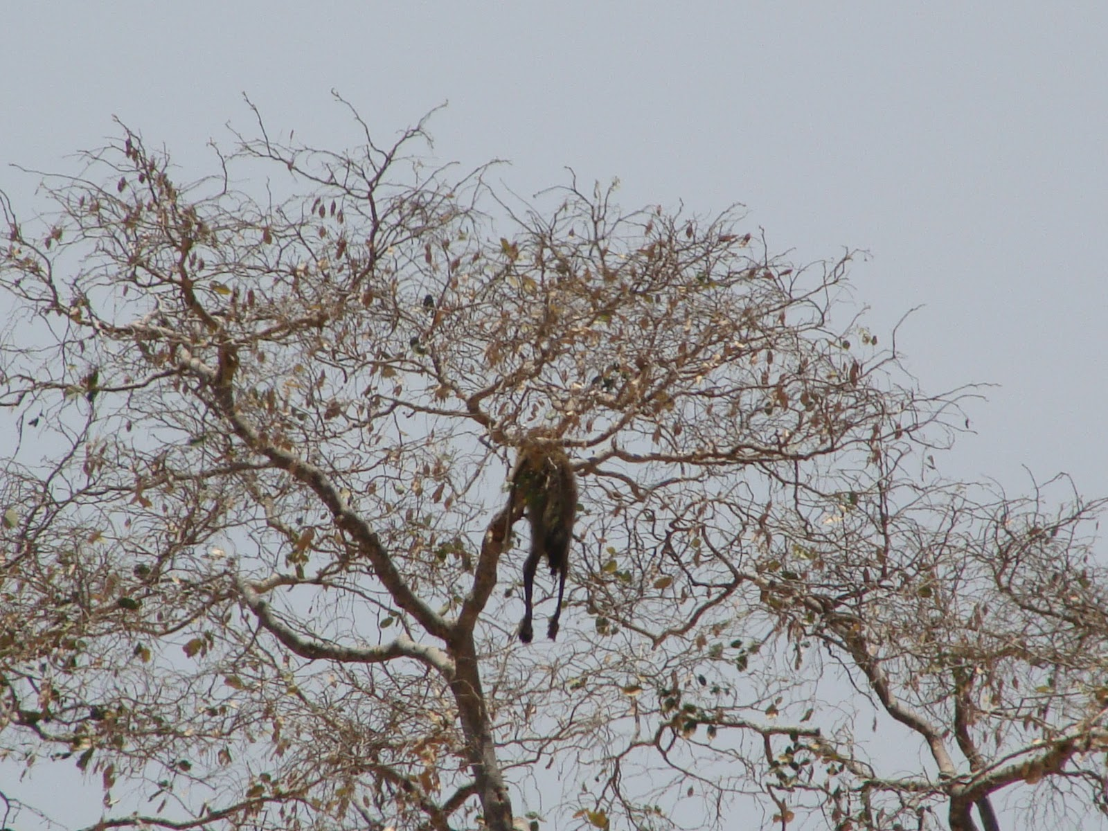 Wildness Safari Tanzania Selous