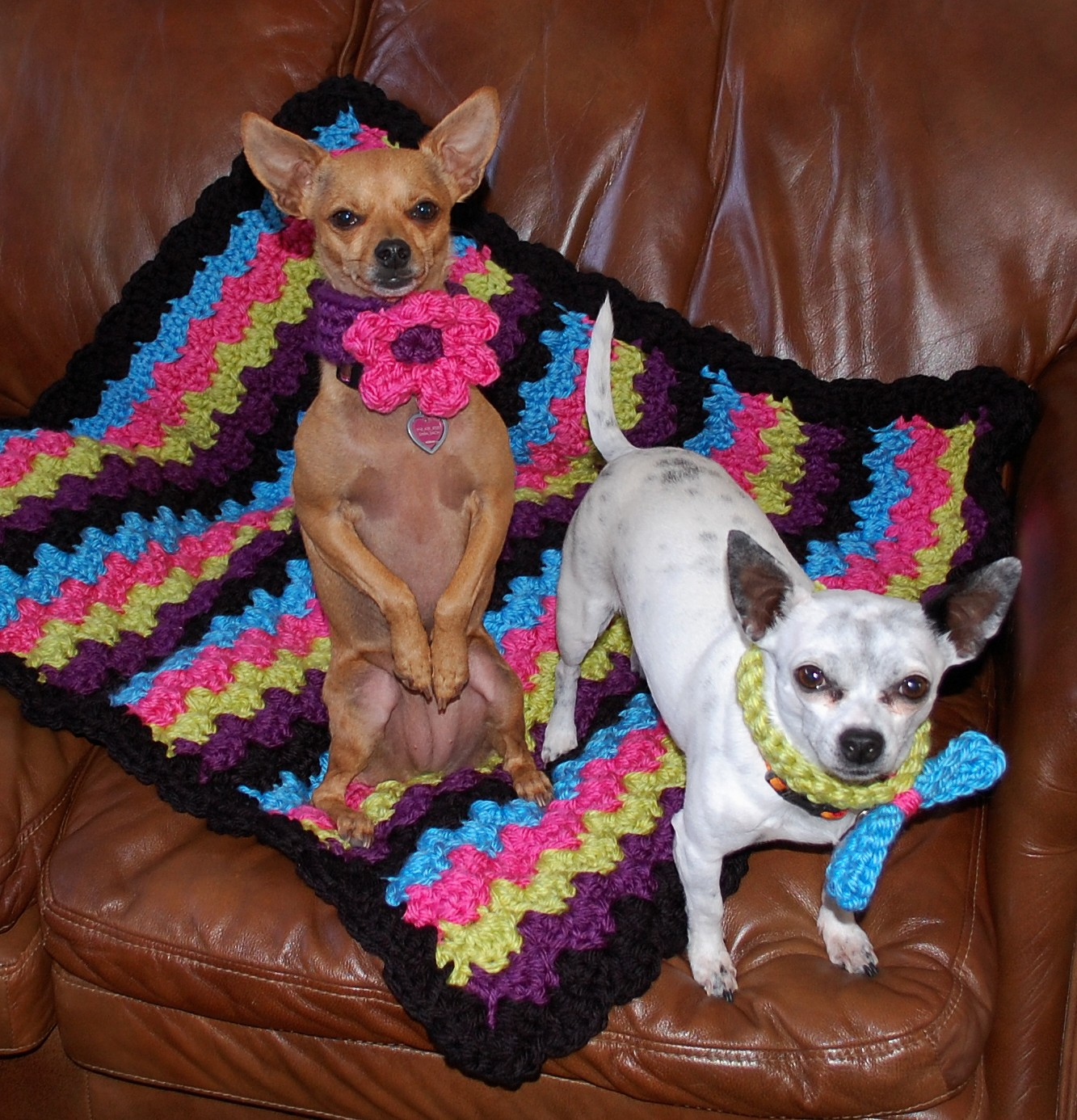 Crochet Pattern For Dog Blanket : Posh Pooch Designs Dog Clothes: Chunky Dog Collars