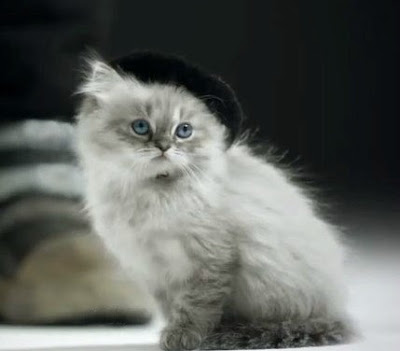 French Puss Cat Beret