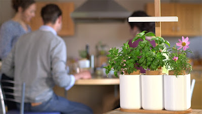 Best Ways To Grow Herbs Indoors - Lilo