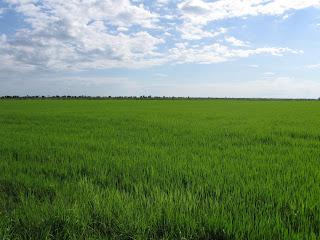 Perímetros irrigados auxiliam agricultores do semiárido - Foto: Roque Marinato