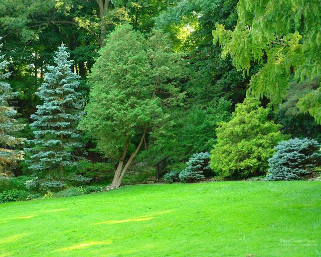 Green Garden: Green Garden Background