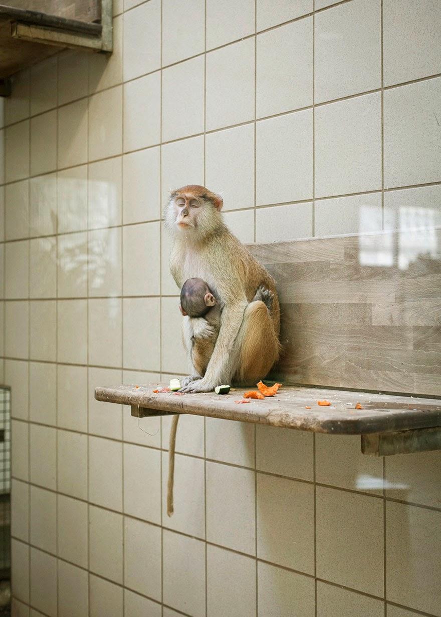 fotos deprimentes de zoologicos
