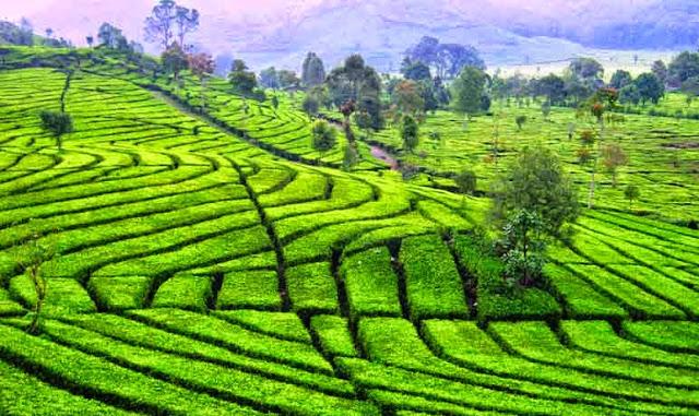 Tipe iklim dan bentang budaya Indonesia - Sejarah Negara Com