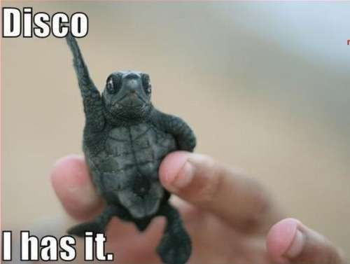Disco Turtle - I Has It