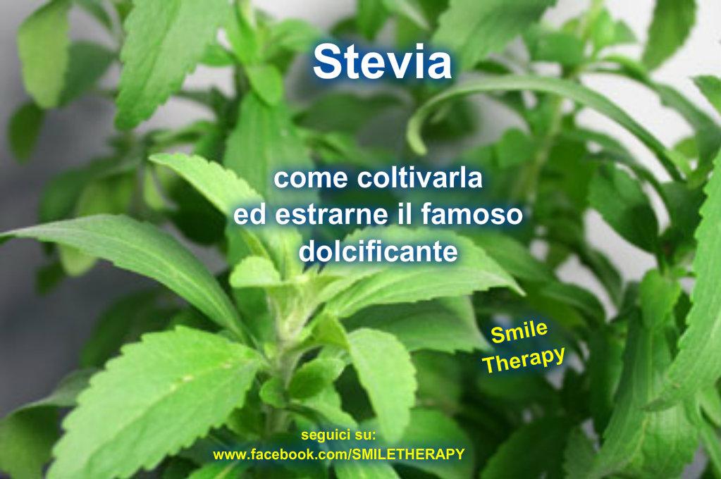 Realt o fantasia come coltivare la stevia ed for Stevia pianta