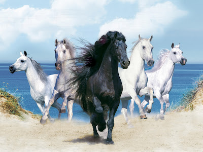 Black White Horse Wallpapers HQ