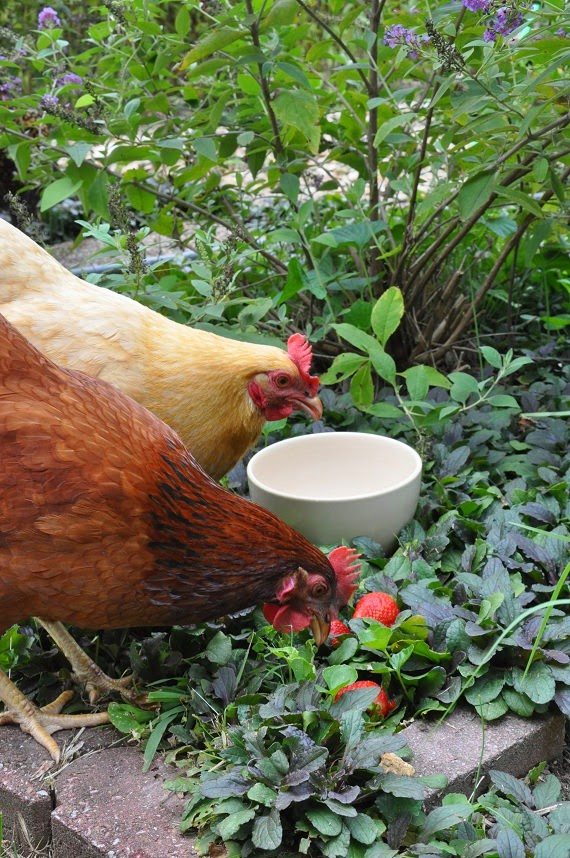 Readeru0027s Question: How Do I Keep The Chickens Out Of My Garden? | Community  Chickens