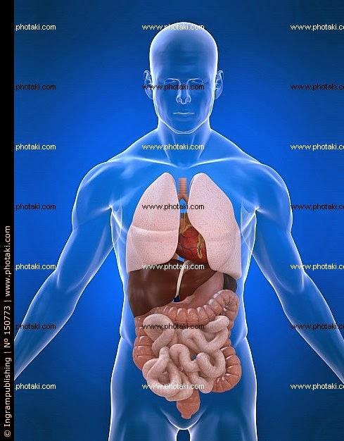 Anatomía Abdomen y Pelvis